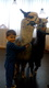 Galeria Maleństwa Alpaki